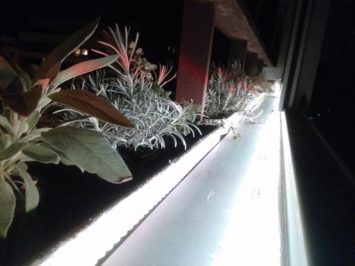 Iluminación con tira led plantas